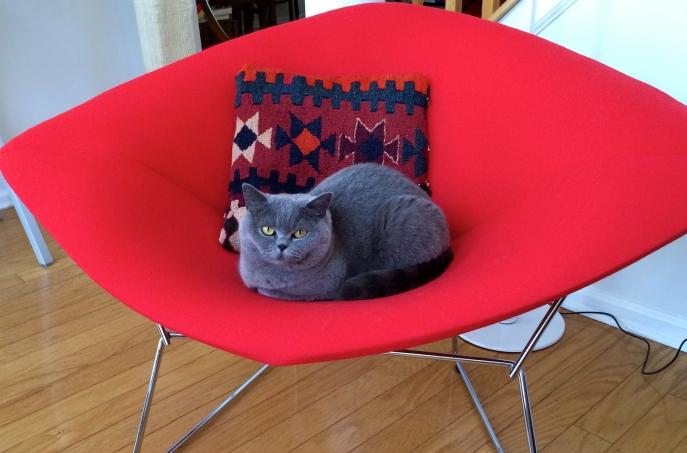 Sasha:  Miaow.