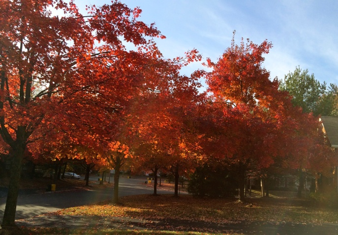 Autumn on McComb Road