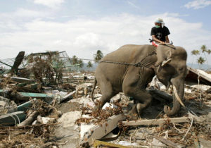 elephant tsunami